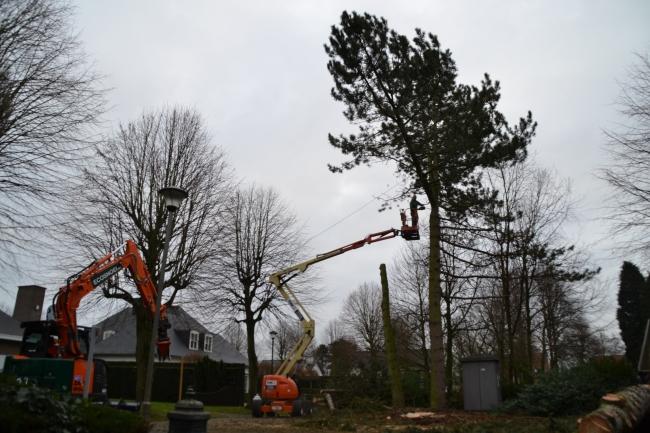 Vellen van bomen